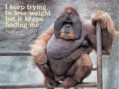 Funny Monkey Photo: I keep trying to lose weight but it keeps finding me. Loose Weight, Reduce Weight, Easy Weight Loss, Healthy Weight Loss, Keep Trying, Trying To Lose Weight, Losing Weight, Weight Gain, Ugly Monkey