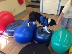 Varying Heights Challenge | FitPAWS® Canine Conditioning Equipment