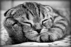 Sweet kitten #cat