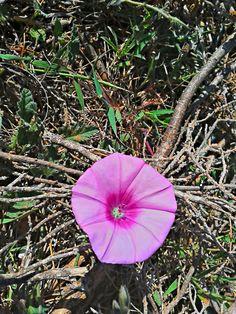 flora de La Renegá, en Oropesa