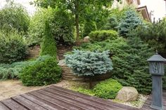 Garden Ideas backyard garden and lands Garden Design Pictures, Home Garden Design, Diy Garden Fence, Garden Trees, Heather Gardens, Small Patio Design, Evergreen Garden, Backyard Makeover, Front Yard Landscaping
