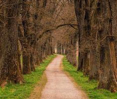 Creativity Lies in Stillness and Silence