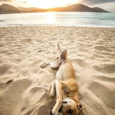 Playa en el parque tayrona Sierra Nevada, Fauna, Kangaroo, Instagram, Animals, Natural Playgrounds, Ancient Art, Trekking, Colombia
