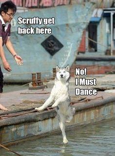 Scruffy must dance.