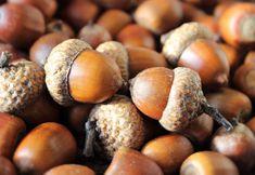 SOUND: https://www.ruspeach.com/en/news/13778/     Желуди - это плоды дуба. Сегодня желуди используются для корма животных, особенно свиней. Желуди активно употреблялись в пищу людьми в Средневековой Европе вплоть до шестнадцатого века. В наши дни они используются в корейской кухне для приготовления корейского желе. Дети делают поделки из желудей.    Acorns are oak fruits. Today acorns are used for a forage of animals, especially pigs. Acorns were actively eaten by people in