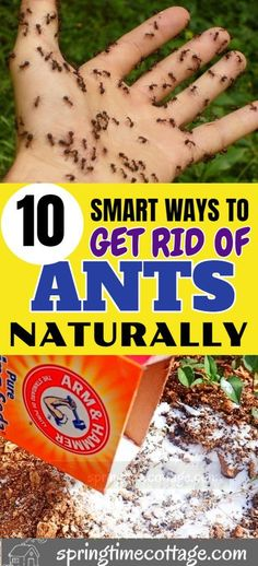 Natural Remedies For Ants, Home Remedies For Ants, Ant Remedies, Health Remedies, Flea Remedies, Natural Ant Repellant, Ants In Garden, Garden Pests, Herbs Garden