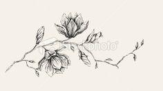 Magnolia Flower Drawing