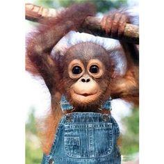 baby monkey <3