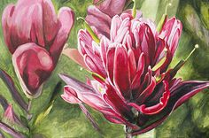 Indian Paintbrush - Acrylic painting fine art prints for sale by Aaron Spong