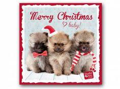 Hunderassen WeihnachtskartenMyrna Weihnachtskarte: Pomeraner - Zwergspitz