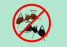 wikiHow to Get Rid of Ants
