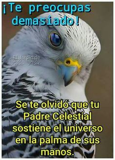 Catholic Bible, Padre Celestial, Spanish Phrases, American Soldiers, Nostalgia, Owl, In This Moment, Shabbat Shalom, Princess
