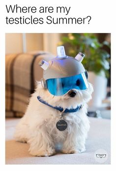 rick and morty costume Rick and Morty - Snowball Funny Dogs, Funny Animals, Funny Memes, 9gag Funny, Movie Memes, Funny Cartoons, Funny Pranks, Funny Fails, Videos Funny