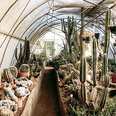 Moorten Botanical Garden, a stunning collection of more than 3,000 species of cactus and other desert-adapted plants
