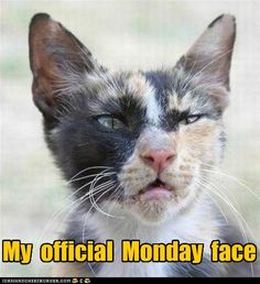 Hmmph...Mondays. Brought to you by Shoplet.com - Everything for your business.