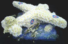 Aeroplane alt view Funeral Flowers Monica F Hewitt Florist Sheffield