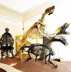 Paleontologia - exposição de longa duração - Museu Nacional do Rio de Janeiro / UFRJ (Museu da Quinta) -  Quinta da Boa Vista, s/n -  São Cristóvão -  (21) 2264-8262