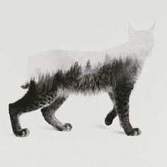 Andreas Lie, lynx, composite, illustration, collage in Collage & Composite Design