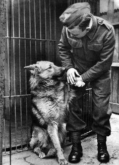 World War II. Mascots Dogs Art Print by Mirrorpix - WorldGallery.co.uk