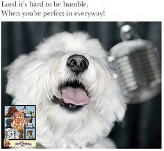 The Perfect Dog, Amazon, Dogs, Amazons, Riding Habit, Pet Dogs, Doggies