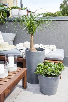 Det er stilig med grønne planter ute på terrassen om sommeren.