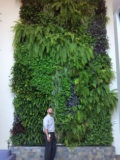 Vertical Gardens Greenwalls look fantastic and provide all of the benefits of plants for businesses of all kinds. Lobbies, hallways, anywhere. Learn about the benefits of vertical gardens. Vertical Garden Systems, Vertical Planting, Vertical Garden Design, Vertical Garden Plants, Jardin Vertical Artificial, Living Green Wall, Living Walls, Vertikal Garden, Walled Garden