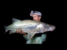 How To: Snook Fishing Tips (Best Videos On The Web)