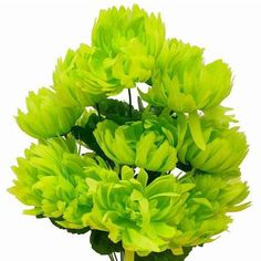 56 GIANT Victory Mums Flowers - Lime |  Take your decorations and celebrations to the next level with our splendid Giant Victory Mum Silk Flowers. Chrysanthemums flowers symbolize happiness, hopefulness, honesty, and humbleness. In Asian culture, this whimsical blossom has great noble significance. It is widely preferred and desired not only for its quirky healing powers but also for the stunning sophistication that it imparts to your surroundings and decorations. Celebrate your Big Victory…