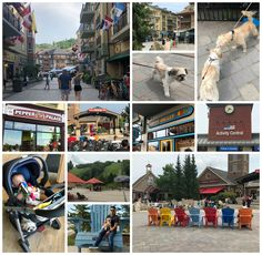miranda loves: Summer Family Vacation & Fun at Blue Mountain Reso. Blue Mountain, Mountain Dogs, Dog Friendly Hotels, Mountain Resort, Best Vacations, Dog Friends, Street View, Posts, Summer