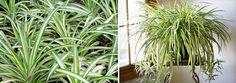Aqui a gente já bateu o martelo várias e várias vezes sobre uso de plantas naturais na decoração da sua casa e não pense você que é apenas porque elas são
