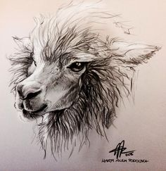 Alpaca Head Study by ISHAWEE