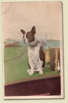 1918-1930 French Bulldog PostcardPhotograph