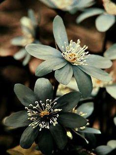 flowers sepia phoyography sepia tone