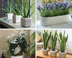 8 plantas para colocar no seu quarto e fazer você dormir melhor