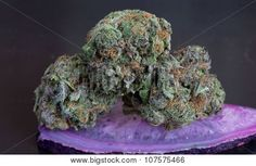 Grape Ape Medicinal Marijuana Stock Photo on BudProducts.US
