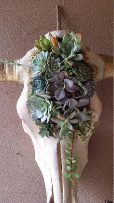 Custom made to order gold cow skull & succulents. Genuine real well preserved and cleaned cow skull. Cow Skull Decor, Cow Skull Art, Garden Art, Garden Plants, Indoor Plants, Succulent Arrangements, Cacti And Succulents, Skull Painting, Houseplants