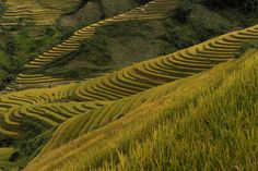 Rice fields in Mu Cang Chai district, in the northern mountainous province of Yen Bai, on October 2, 2013.
