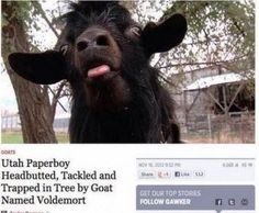 Best Headline Ever Written