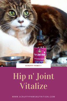 Do you know your cat is sick? Is she suffering from joints pain? Scruffy Paws Hip n' Joint Vitalize that hepls your cats joints pain free and flexible. It Offers full spectrum joint support for your cat with Glucosamine, Chondroitin, MSM, Hyaluronic acid and Taurine. Easy to feed. Check this out! Cool Cat Toys, Cool Cats, Baby Cats, Cats And Kittens, All Types Of Cats, Cat Diet, Cat Nutrition, Silly Cats, All About Cats