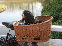 de hond vooraan of achterop de fiets? | HondenForum
