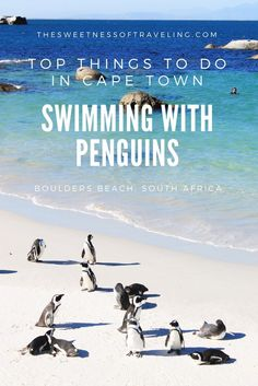 Top things to do in Cape Town: Swimming with penguins on Boulders Beach. Find out how best time to visit, how to get there and how to actually get into the water with penguins. South Africa Travel.