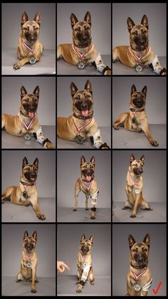Picture of several takes of Layka the dog's portrait
