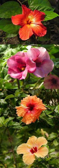 TAHITI FLOWERS © TAHITI TOURISME