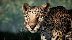 #leopard #nature #animal #animation #gamedev #gameart #UE4 #unrealengine #unity Unity, Animation, Asset Store, Characters, Animals, 3d, Nature, Animales, Naturaleza