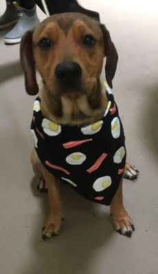 Panama City Fl Hound Unknown Type Meet Eggsy A Pet For