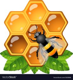 Honeycomb Royalty Free Vector Image - VectorStock