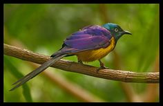 Multi Colored Birds | few snaps of colored birds here .....to see.....