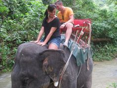 Elephant Trekking Elephant Trekking, Thailand, Sexy Women, Fun, Travel, Animals, Jungles, Viajes, Animales