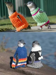 Fashion-conscious penguins