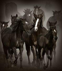Horse - cute image